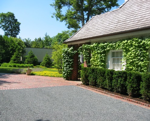 shrubs and vines in landscaping